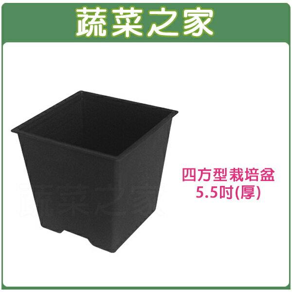 【蔬菜之家005-D114-BL】四方型栽培盆5.5吋-黑色(厚)