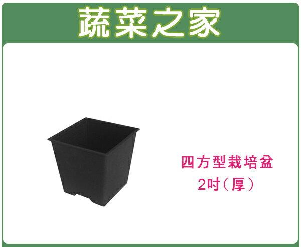 【蔬菜之家005-D112-BL】四方型栽培盆2吋-黑色(厚)