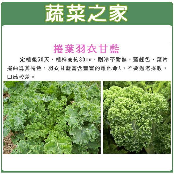 【蔬菜之家】A73.捲葉羽衣甘藍種子100顆