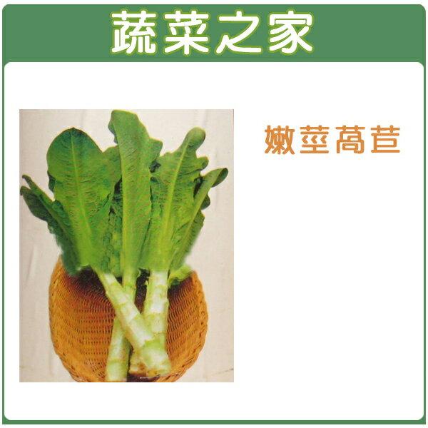 【蔬菜之家】A07.嫩莖萵苣種子2500顆