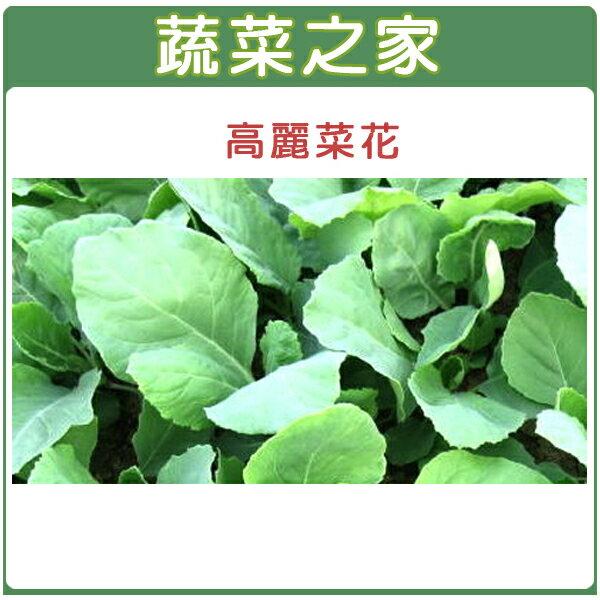 【蔬菜之家】A09.高麗菜花種子500顆