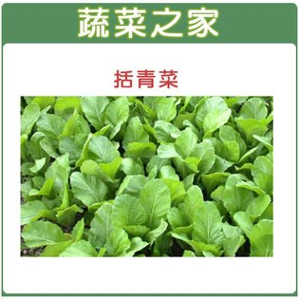 【蔬菜之家】A11.括菜青種子 1000顆