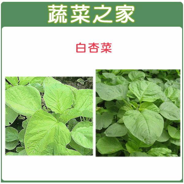 【蔬菜之家】A13.白杏菜種子 15000顆