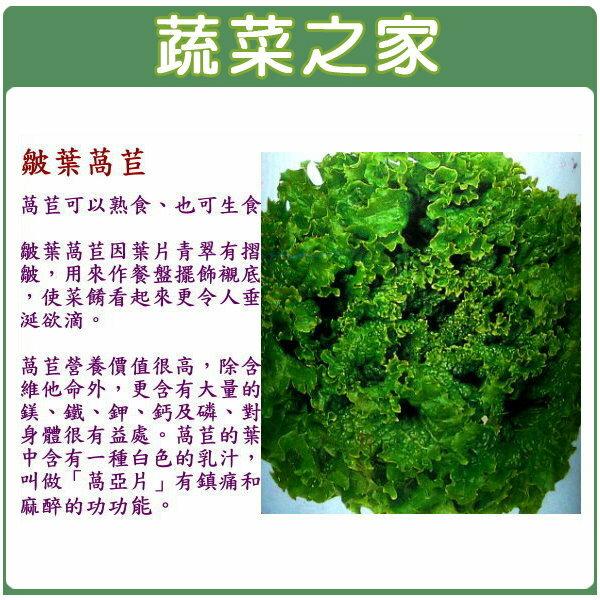 【蔬菜之家】A20.綠葉皺葉萵苣種子(廣東萵)1500顆