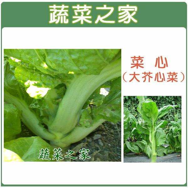 【蔬菜之家】A27.菜心種子(大心芥菜)1000顆