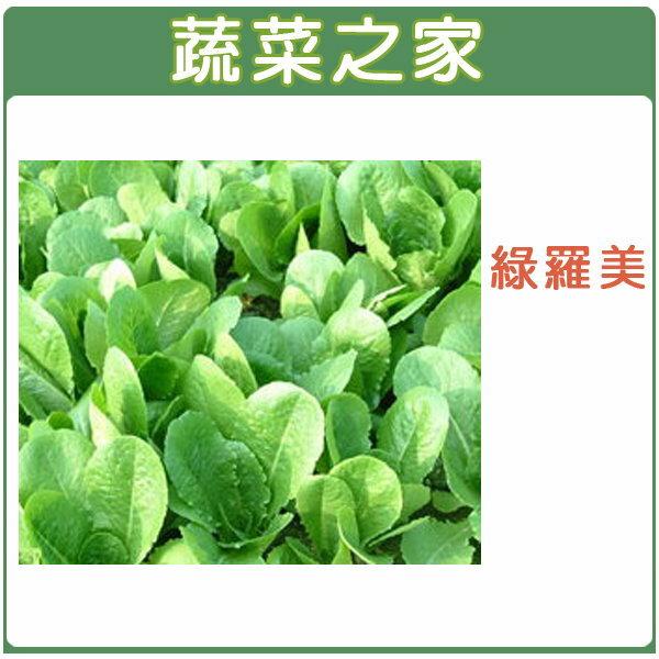 【蔬菜之家】A29.羅美生菜種子(美國進口)1500顆