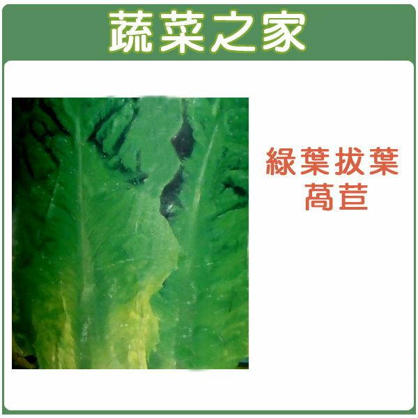 【蔬菜之家】大包裝A30.綠葉拔葉甜萵苣種子15克(日本進口拔葉A菜,韓國烤肉使用包肉生菜)