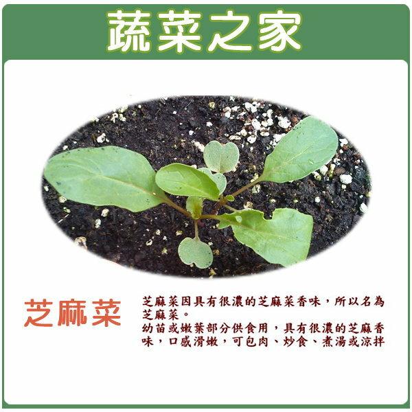【蔬菜之家】A46.芝麻菜種子(箭生菜圓葉種)1000顆