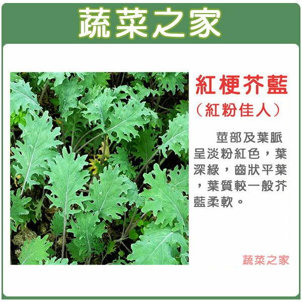 【蔬菜之家】A57紅粉佳人芥藍