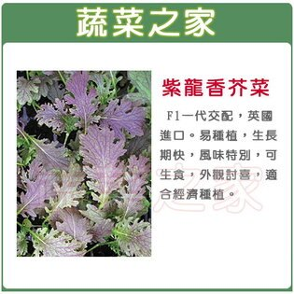 【蔬菜之家】A63紫龍香芥菜種子80顆