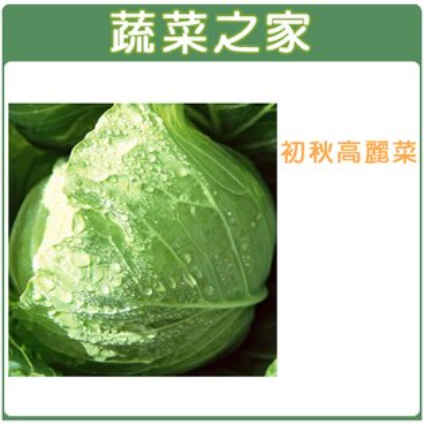 【蔬菜之家】B01.初秋高麗菜種子100顆