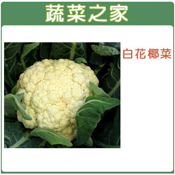 【蔬菜之家】B03.白花椰菜種子50顆