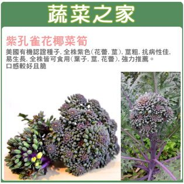【蔬菜之家】B06.紫孔雀花椰菜筍種子20顆