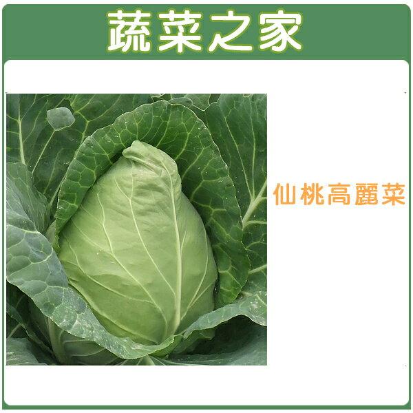 【蔬菜之家】B09.仙桃高麗菜種子100顆