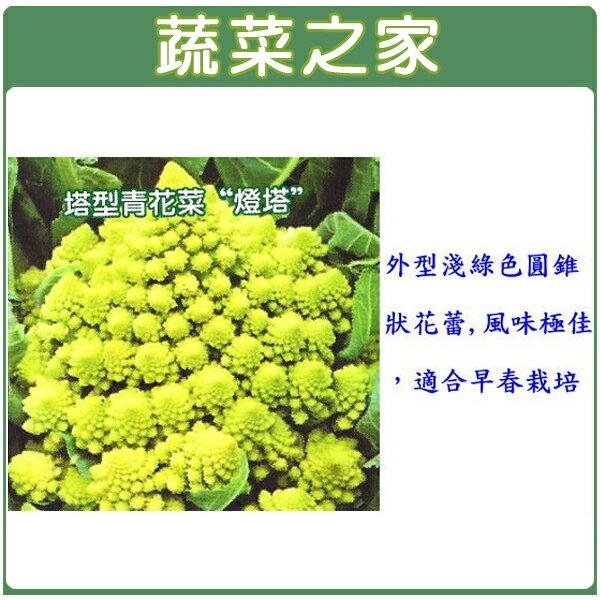 【蔬菜之家】B11.塔型青花椰菜種子50顆