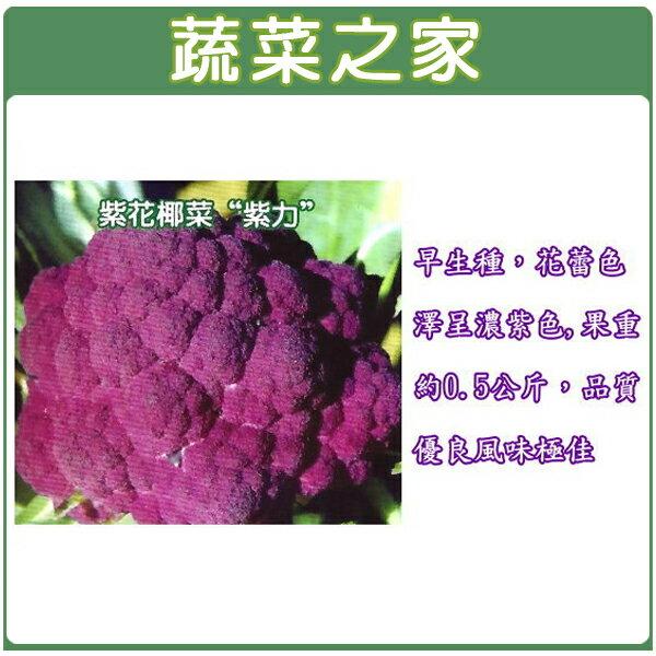 【蔬菜之家】B13.紫色花椰菜種子120顆