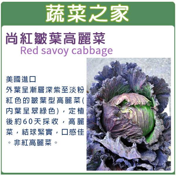 【蔬菜之家】B17.尚紅皺葉高麗菜種子30顆