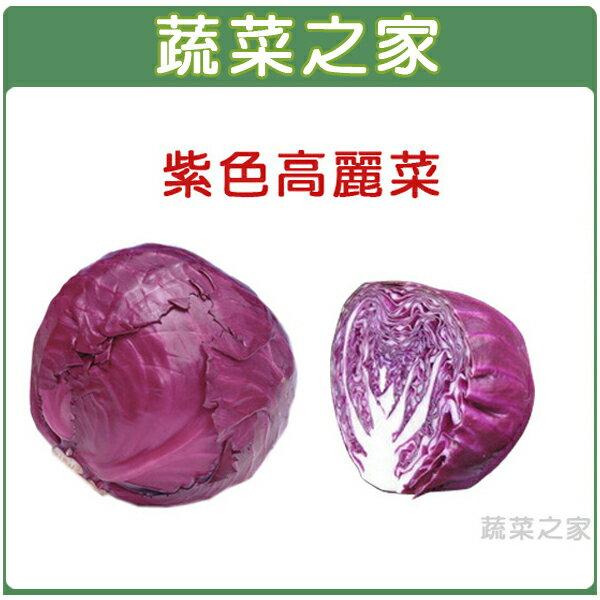 【蔬菜之家】B19.紫色高麗菜種子50顆