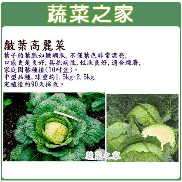 【蔬菜之家】B20.皺葉高麗菜種子80顆