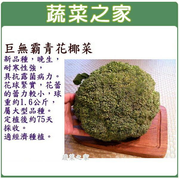 【蔬菜之家】B21.巨無霸青花椰菜種子60顆