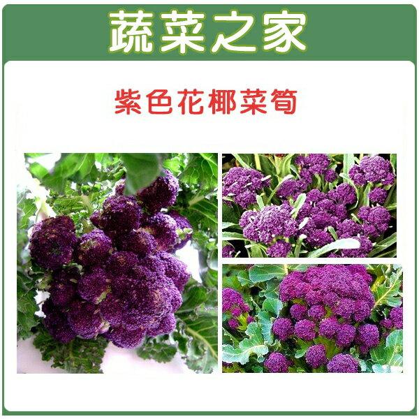 【蔬菜之家】B23.紫色花椰菜筍種子