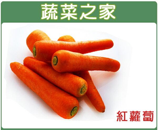 【蔬菜之家】C01.紅蘿蔔種子3000顆
