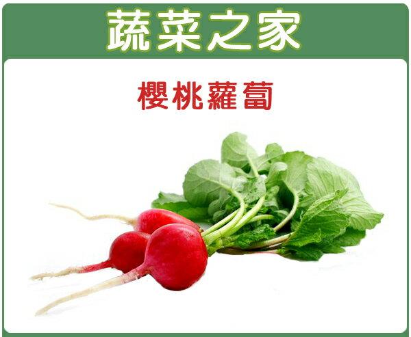 【蔬菜之家】C05.櫻桃蘿蔔種子200顆