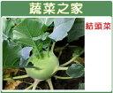 【蔬菜之家】C07.結頭菜種子300顆