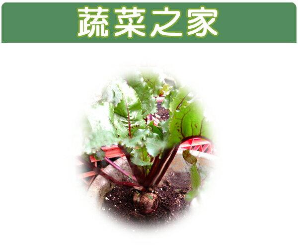 【蔬菜之家】C13.長型甜菜根種子60顆