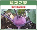 【蔬菜之家】C15.紫色結頭菜種子300顆