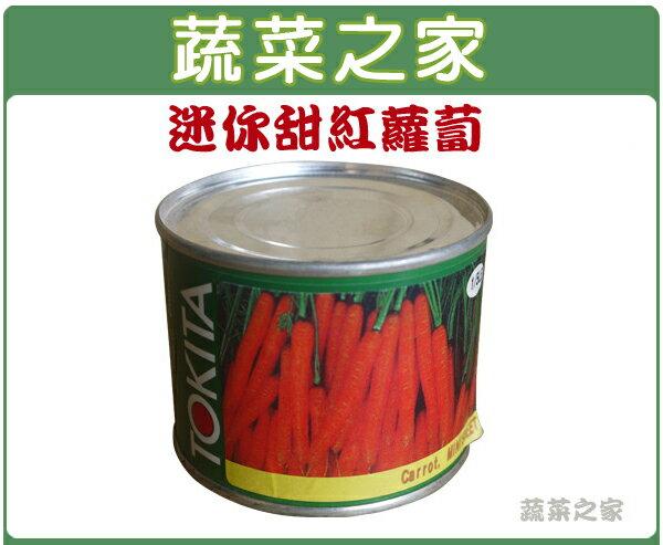 【蔬菜之家】C16.迷你甜紅蘿蔔種子600顆