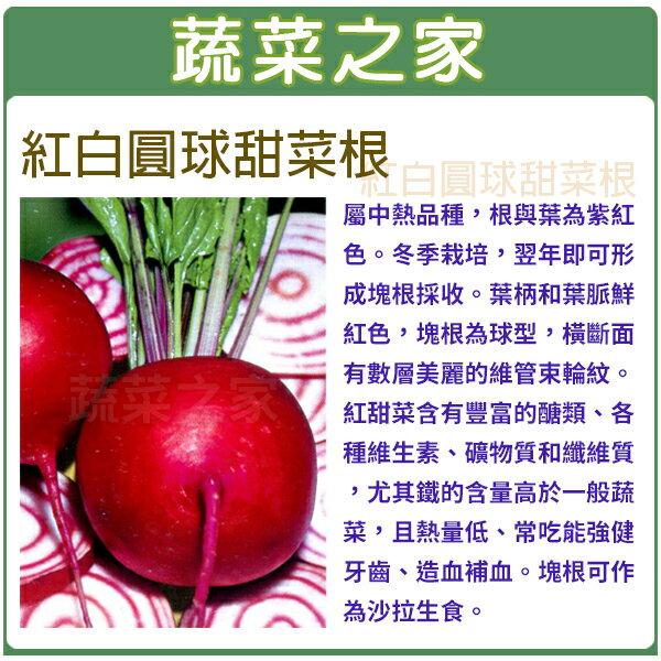【蔬菜之家】C18.紅白圓球甜菜根100顆