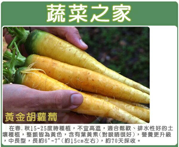 【蔬菜之家】C20.黃金胡蘿蔔種子