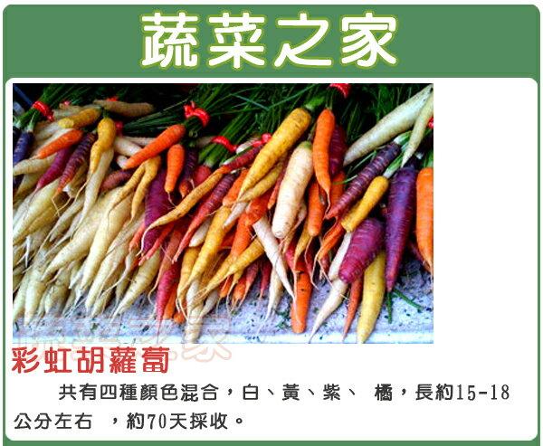 【蔬菜之家】C24.彩虹胡蘿蔔種子