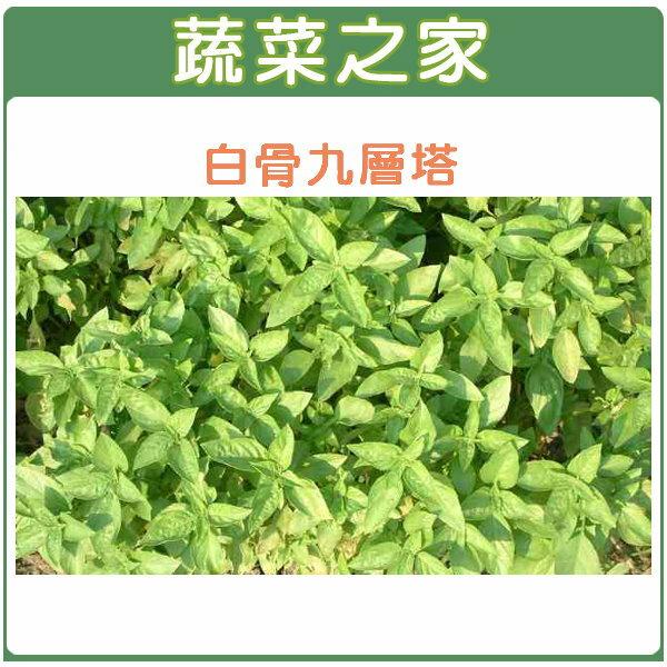 【蔬菜之家】F01.九層塔 (白骨羅勒)種子500顆
