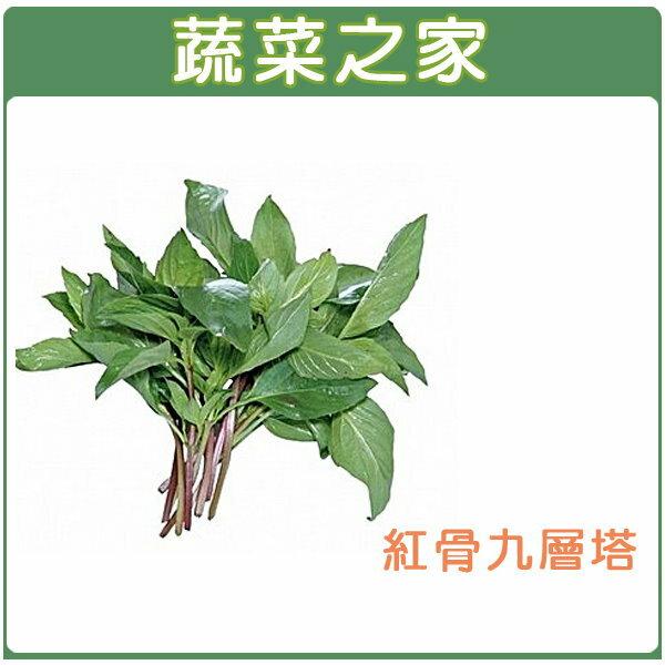 【蔬菜之家】F02.九層塔 (紅骨羅勒)種子500顆