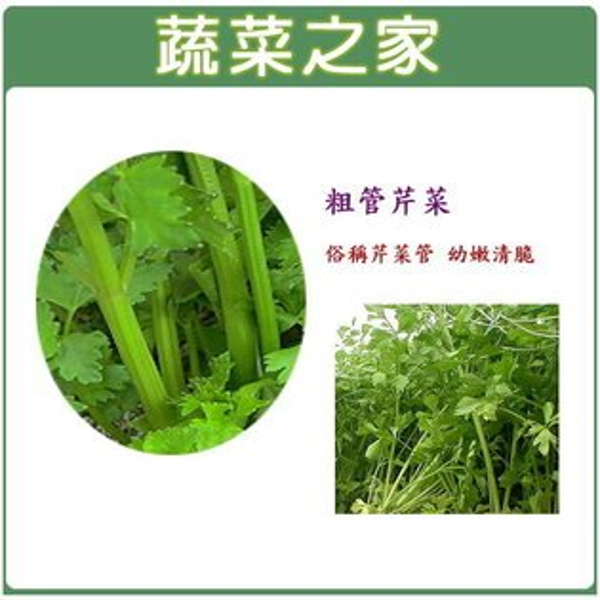 【蔬菜之家】F13.抽管芹菜種子7500顆 (芹菜管,粗管抽苔青芹)