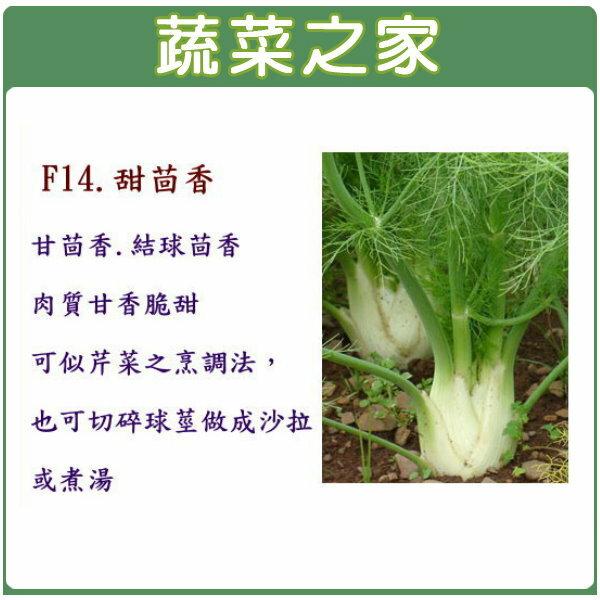 【蔬菜之家】F14.甜茴香種子200顆(甘茴香.結球茴香)