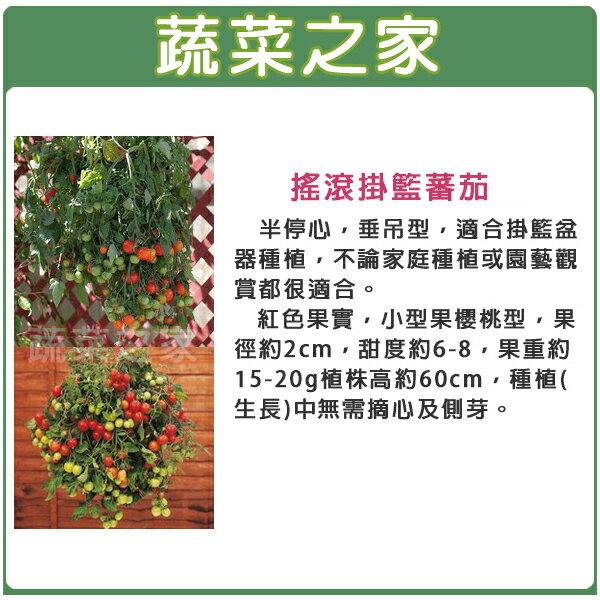 【蔬菜之家】G89.搖滾掛籃蕃茄種子1顆