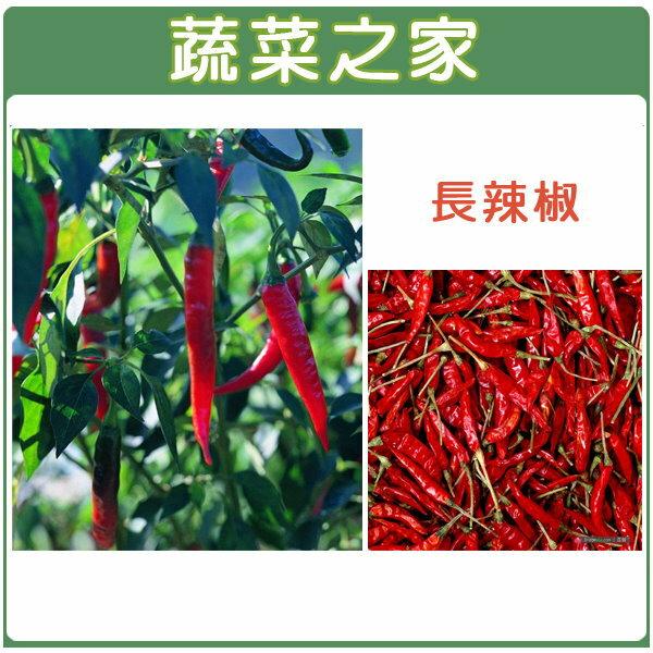 【蔬菜之家】G02.辣椒種子10顆