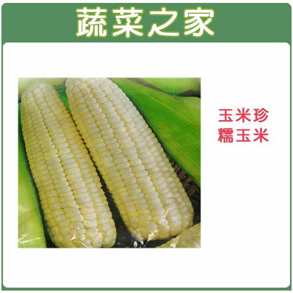 【蔬菜之家】G06.糯玉米(玉美珍)種子 20顆