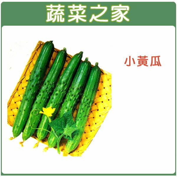 【蔬菜之家】G11.小黃瓜種子50顆