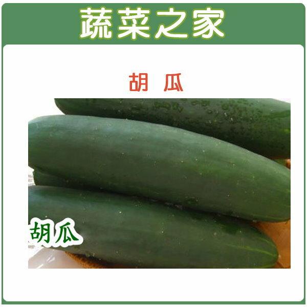 【蔬菜之家】G12.胡瓜種子50顆