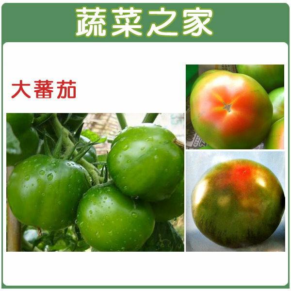 【蔬菜之家】G19.大番茄種子35顆(一點紅品種)