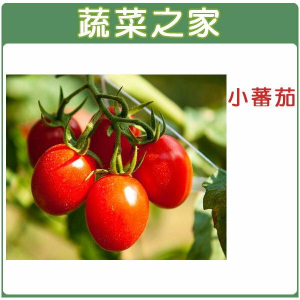 【蔬菜之家】G20.小番茄(小金鋼)種子10顆