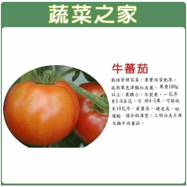 【蔬菜之家】G36.牛番茄種子 5顆