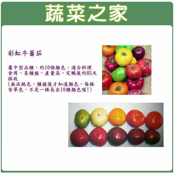 【蔬菜之家】G49.彩虹牛蕃茄種子5顆(約10色綜合)
