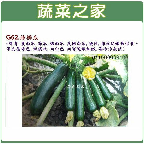 【蔬菜之家】大包裝G62.綠櫛瓜(輝青.夏南瓜.節瓜.嫩南瓜.美國南瓜)種子50顆