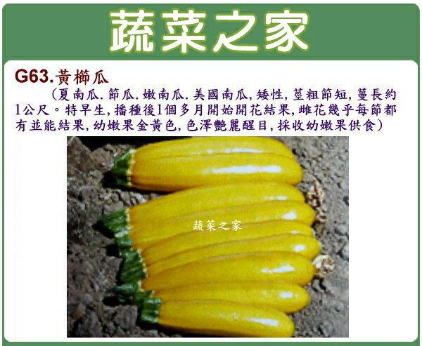 【蔬菜之家】大包裝G63.黃櫛瓜(阿滿.夏南瓜.節瓜.嫩南瓜.美國南瓜)種子35顆