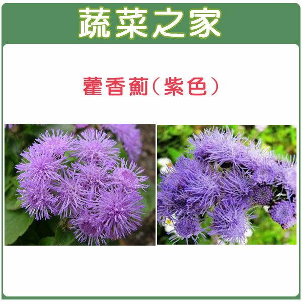 【蔬菜之家】H12.藿香薊(紫色,高20~35cm)種子30顆